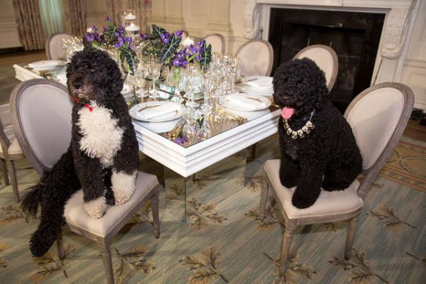 Obama-Dogs-China-Crystal.jpg.cf(2).jpg